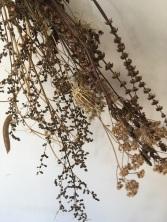 parisette fleurs sechées